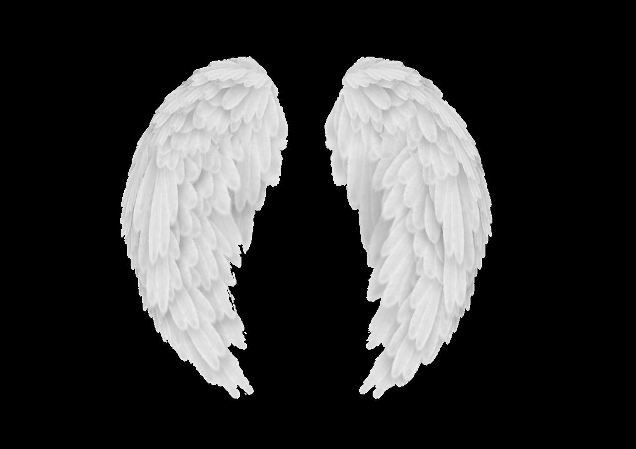 Wings Wing Alas Ala Overlay Tumblr White Blanco Angel Angel Wings Png Wings Png Overlays Transparent