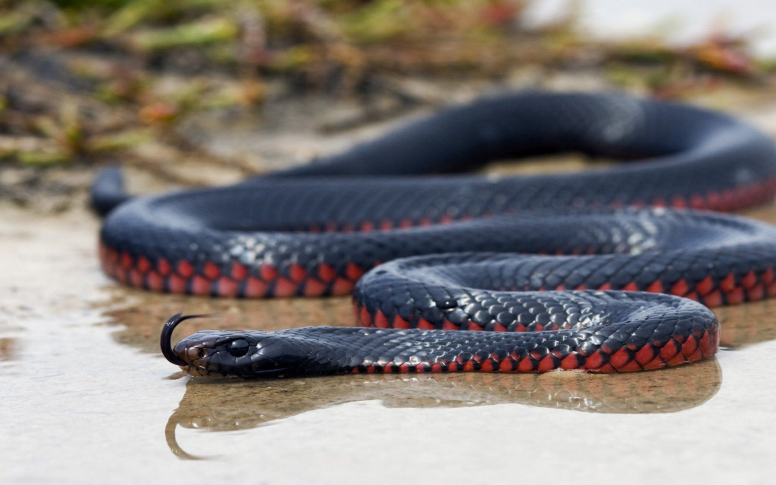 Snakes Photos Background HD Wallpapers