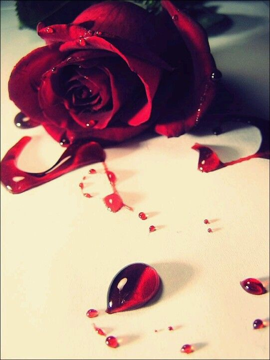 Bleeding Rose Bleeding Rose Black Rose Rose