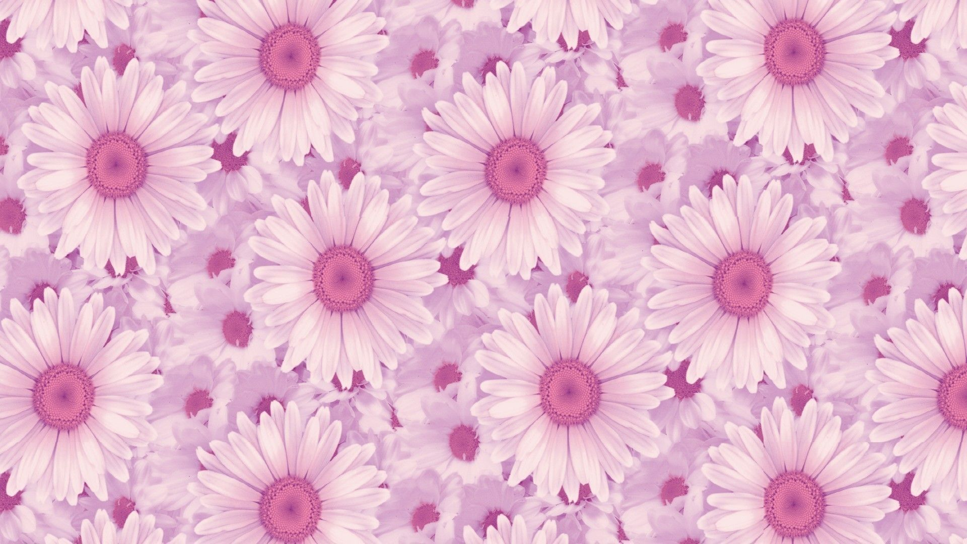 See more ideas about flower wallpaper, flower aesthetic, flowers photography. 73 Wallpaper Pink Aesthetic Tumblr Quotes | Aesthetic ...