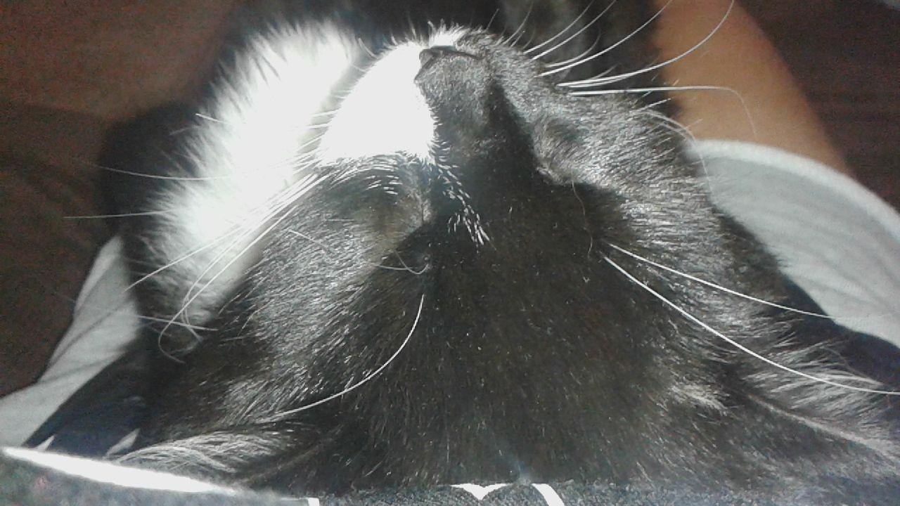 Rakastan todella  paljon mun edesmennyttä Pörrö nimistä kissaani. Pörrö elää mun muistoissa ikuisesti