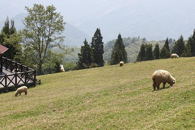 清境農場(南投県)