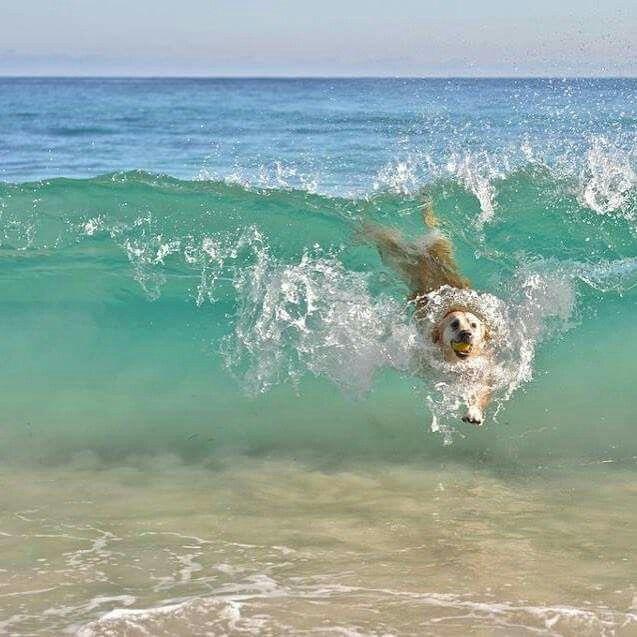 surfin!