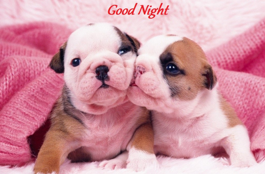 70 Free Good Night Images Lovely Hd Good Night Wallpapers Fun Sprout In 2020 Puppy Kisses Puppy Dog Pictures Cute Puppies