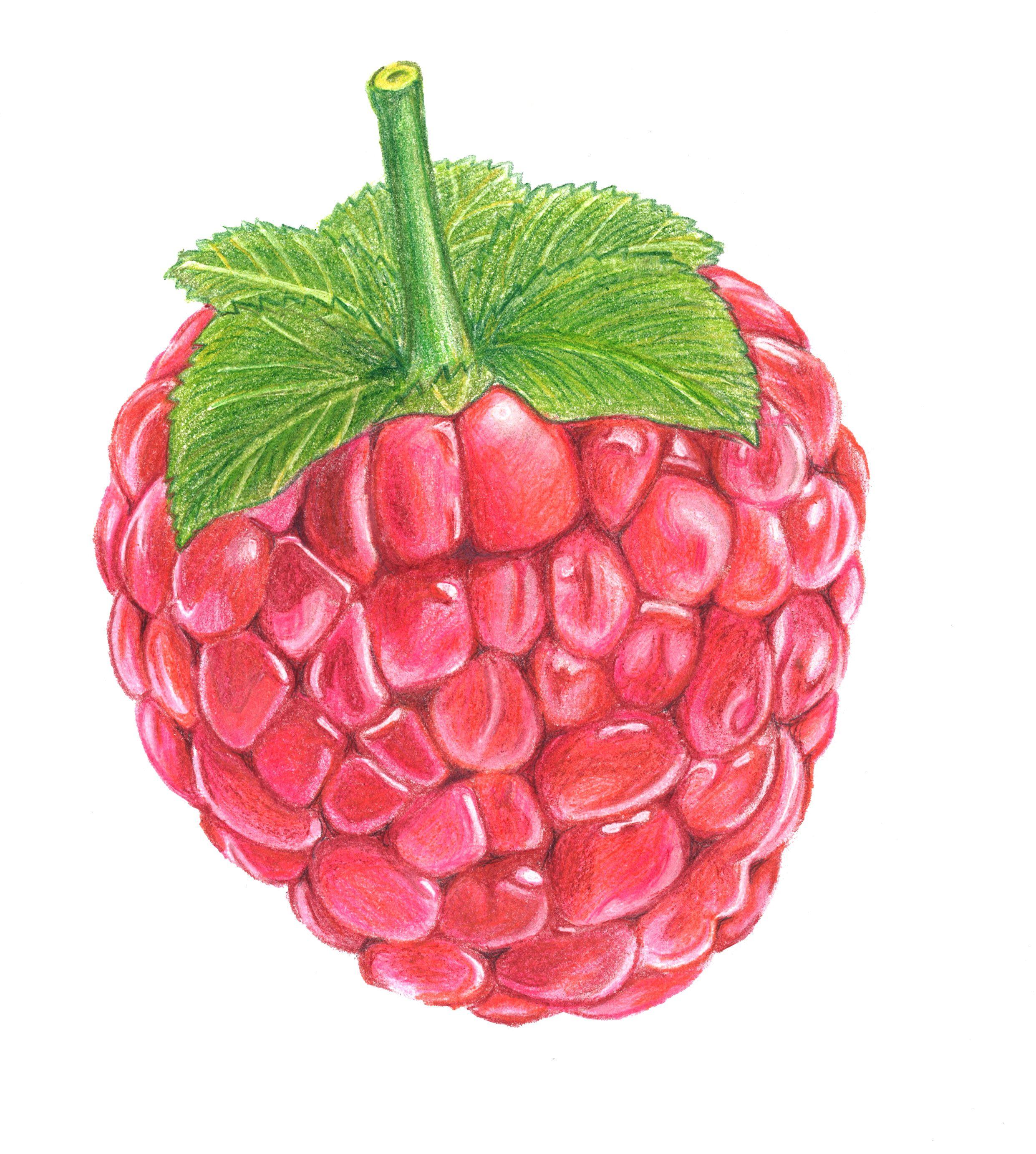 Картинки ягод нарисовать