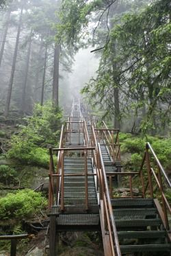 Stairway to heaven - Adrspach CZ....Well it could give you a heart attack climbing all those stairs so that you get there sooner!...