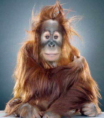 - I'm so sexy! <3 - sexy ape