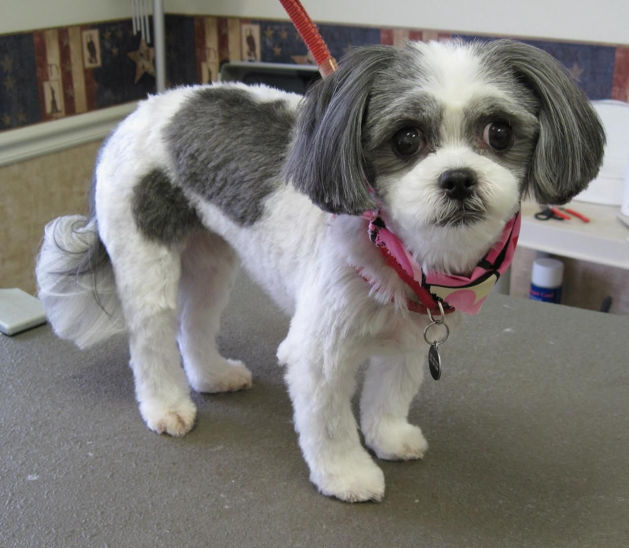 Yorkie hairstyles short hairstyle haircuts - Dog