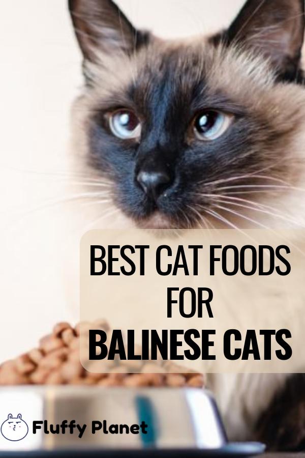 7 Best Cat Foods For Balinese Cats [ 2020 ] Best cat