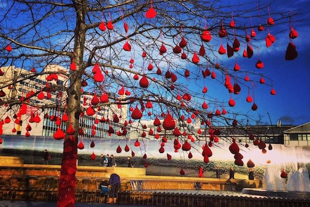 Knitted blood drops hanging from a tree in Sheffield to encourage 17-24 year-olds to donate blood