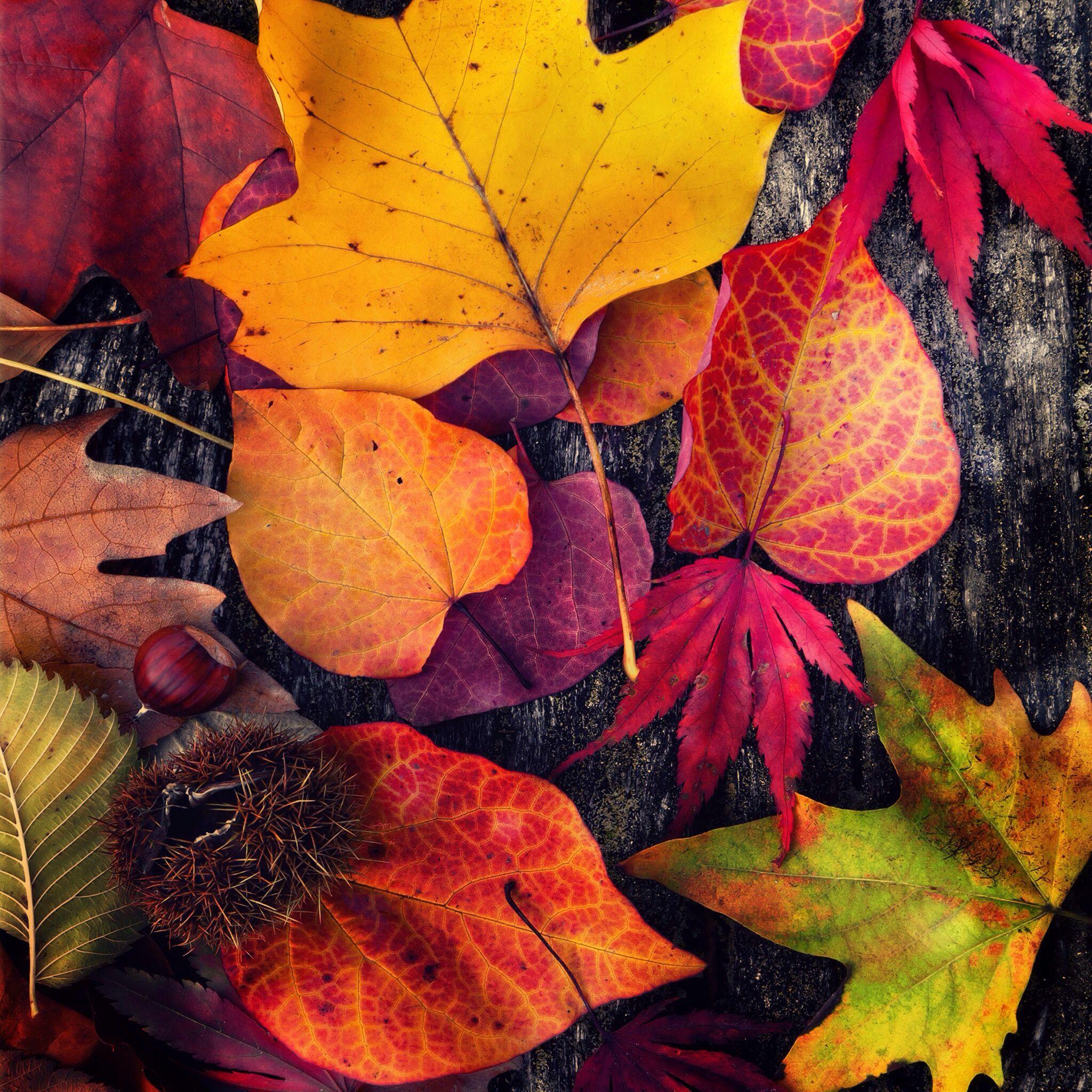 Fall Leaves おしゃれまとめの人気アイデア Pinterest Resat