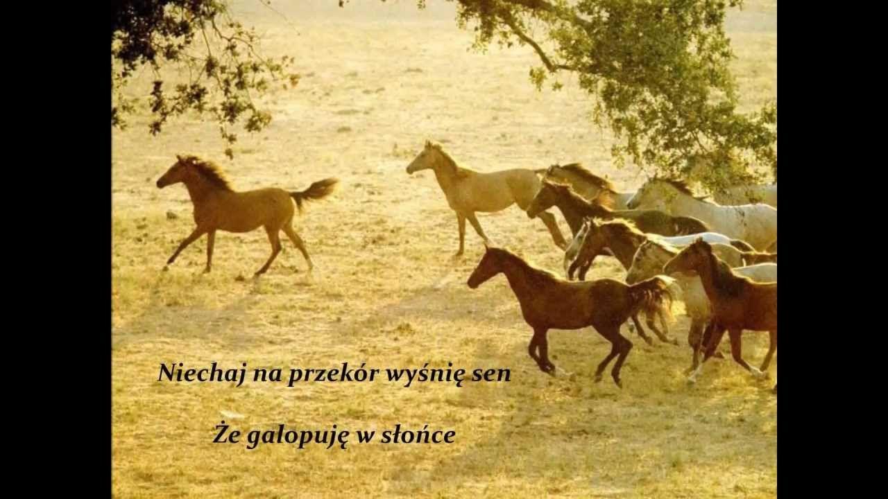 Modlitwa Konia Z Transportu Piekny Wzruszajacy Wiersz