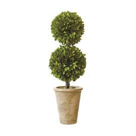 Preserved Boxwood Double Topiary