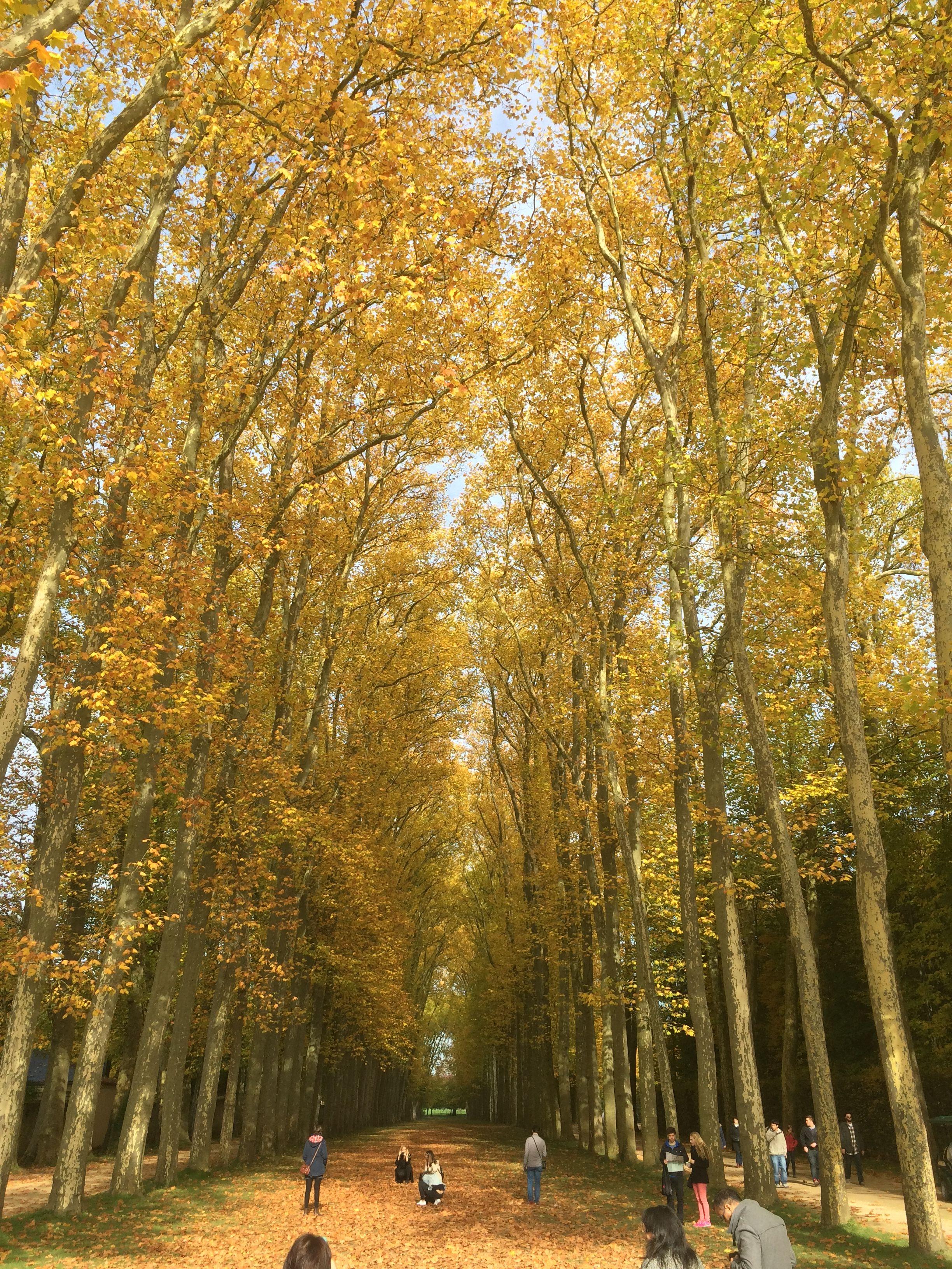 Versailles in October !