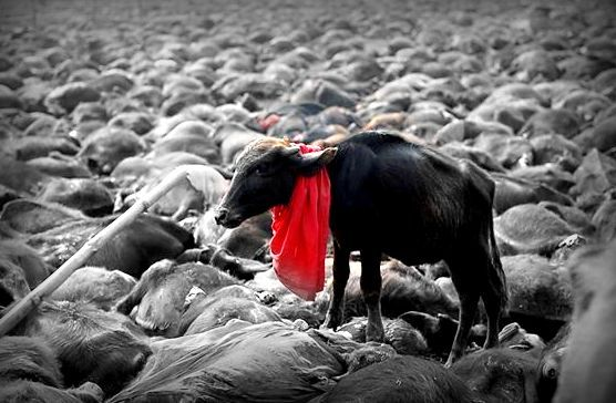 Nepal Temple Trust announces a ban on animal slaughter at