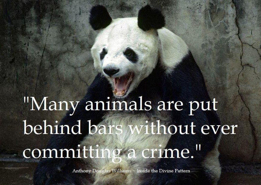 Many Animals Are Put Behind Bars Without Ever Committing A