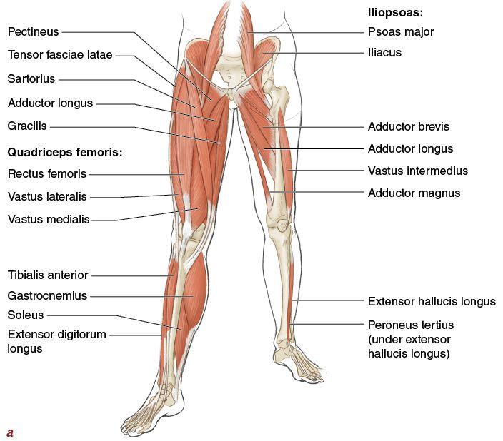 Muscles, Movement Analysis, and Mat Work - Pilates Anatomy ...