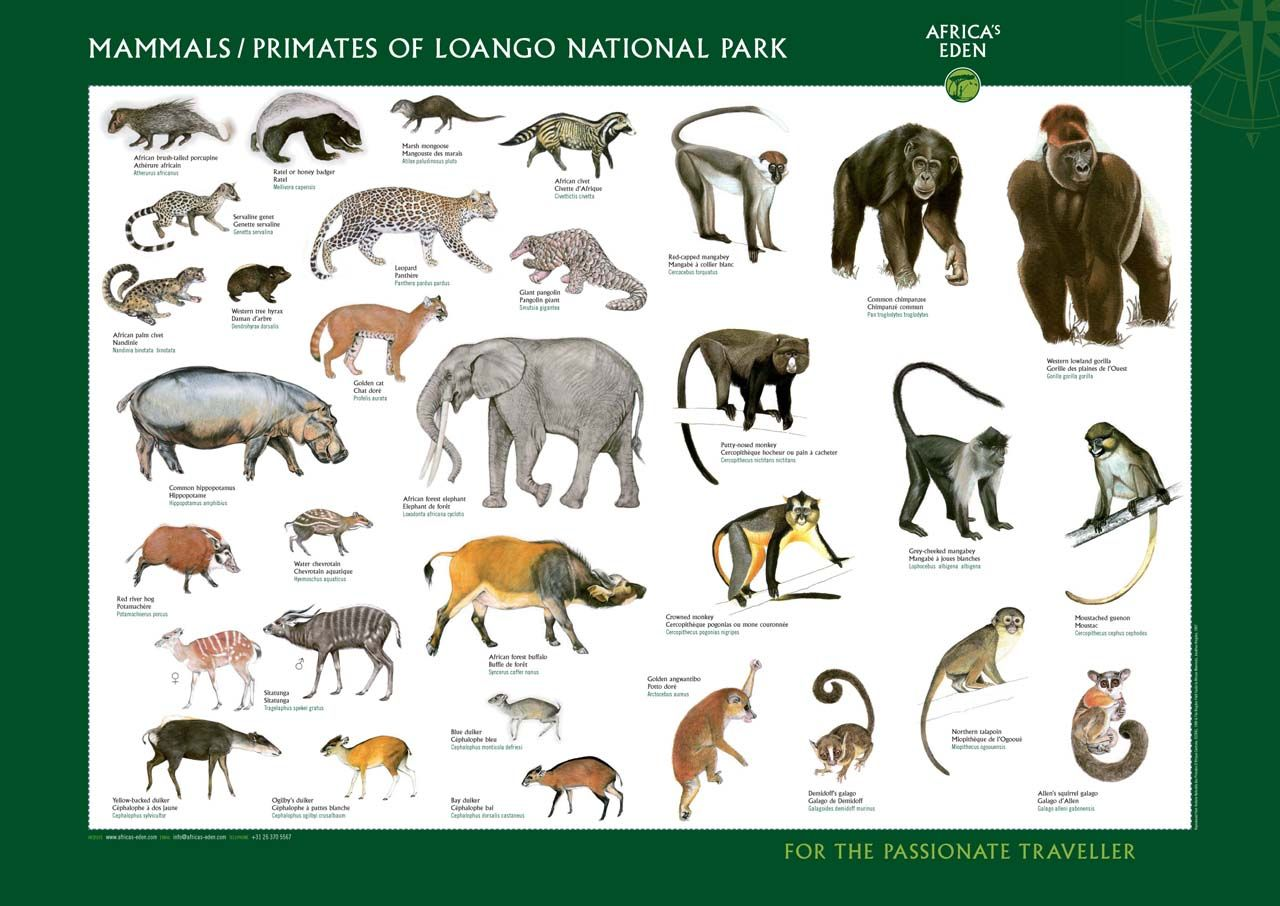 Wild Animals Pictures With Names For Kids