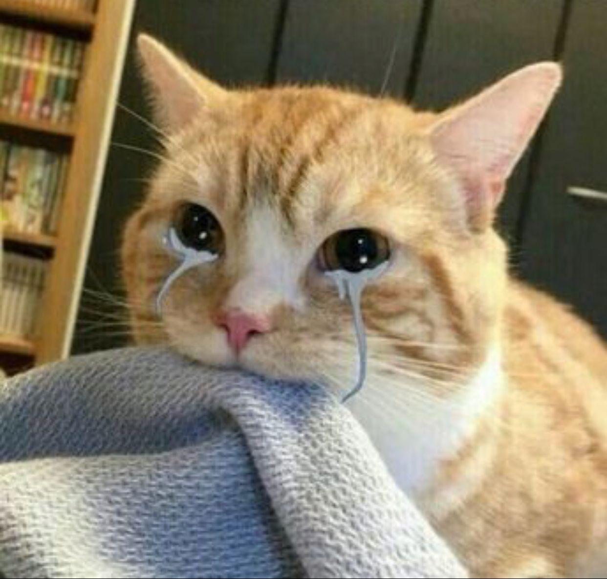 Top 29 Crying Cat Memes Cute cat memes, Cat memes, Cute