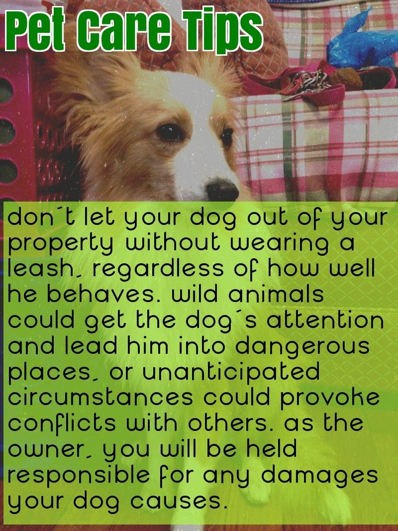 Want Advice On Dogs This Is For You Pet Care Dogs Pet Care Pet Care Tips