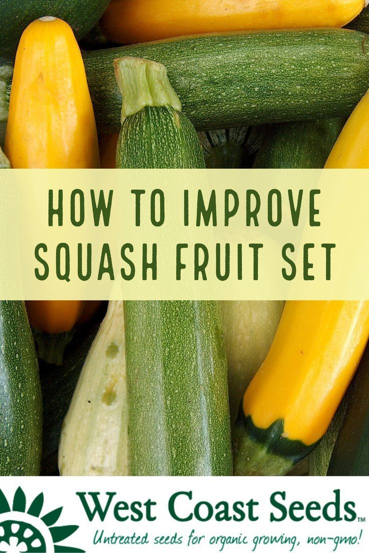 squash pollination vegetable garden seeds and plants