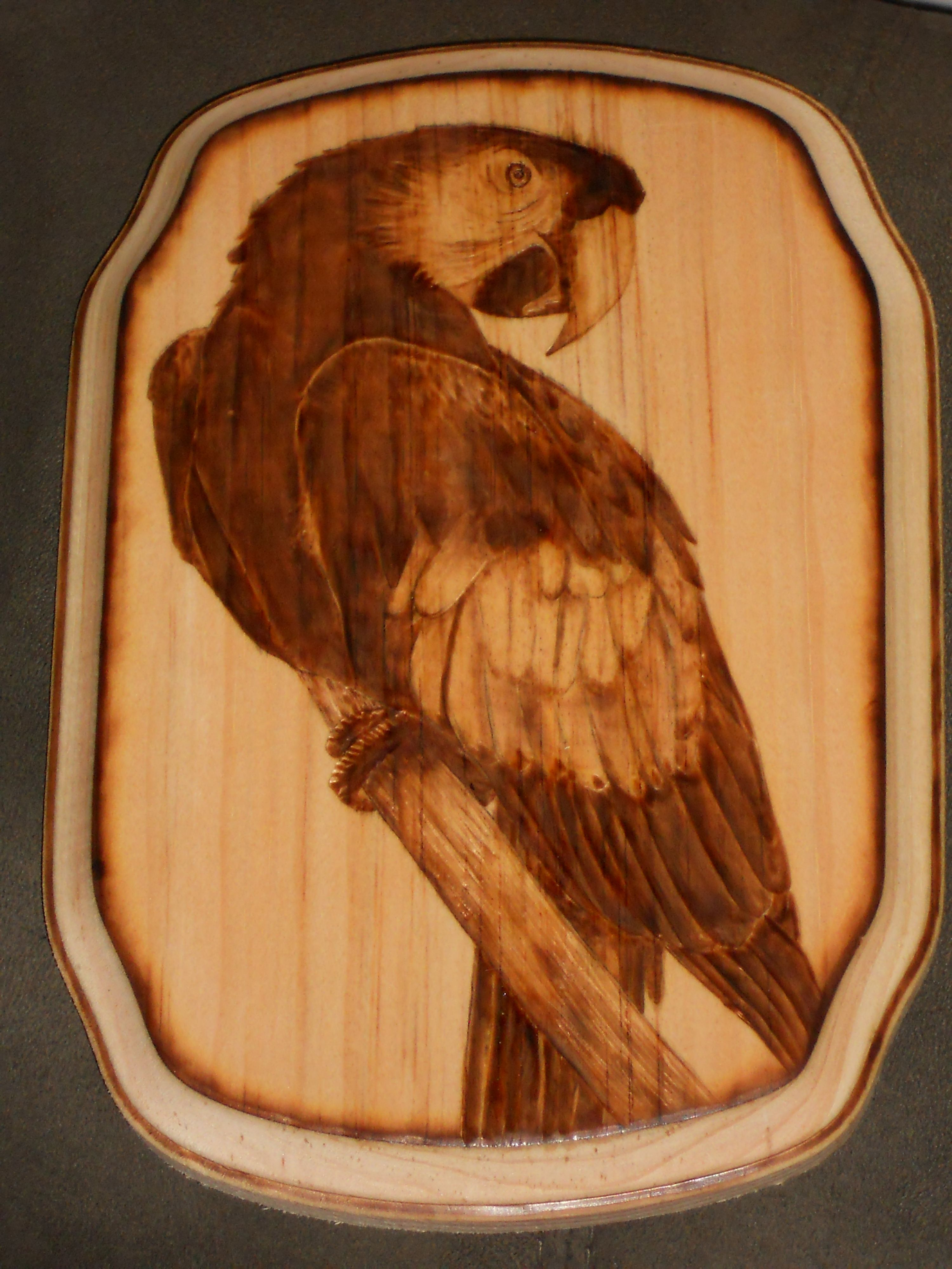 Wood burned art by Colleen Jess  Parrot  http://www.facebook.com/pages/Great-Jesspectations/87931702513