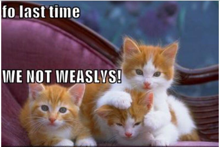 I couldnt stop laughing when i saw this harry potter