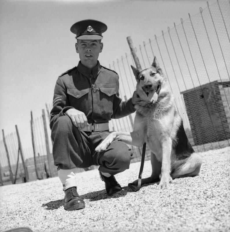 Home Military Dogs Military Working Dogs War Dogs