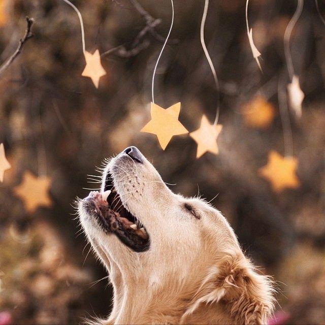 Un perro jugando con estrellas