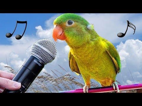 Funny Birds Meow Imitate iPhone Alarm Parrots Talk Dance