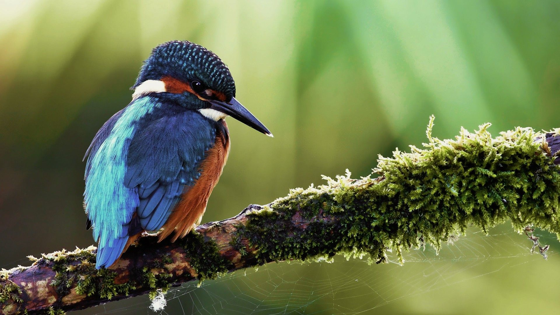 high res animals anyone too cute bird wallpaper birds y pretty