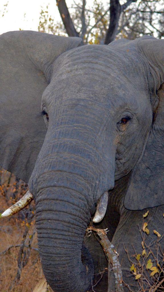 Photo of iPhone Tier Wallpaper HD – iPhone Tier Wallpaper HD – #Animal #animalwallp …