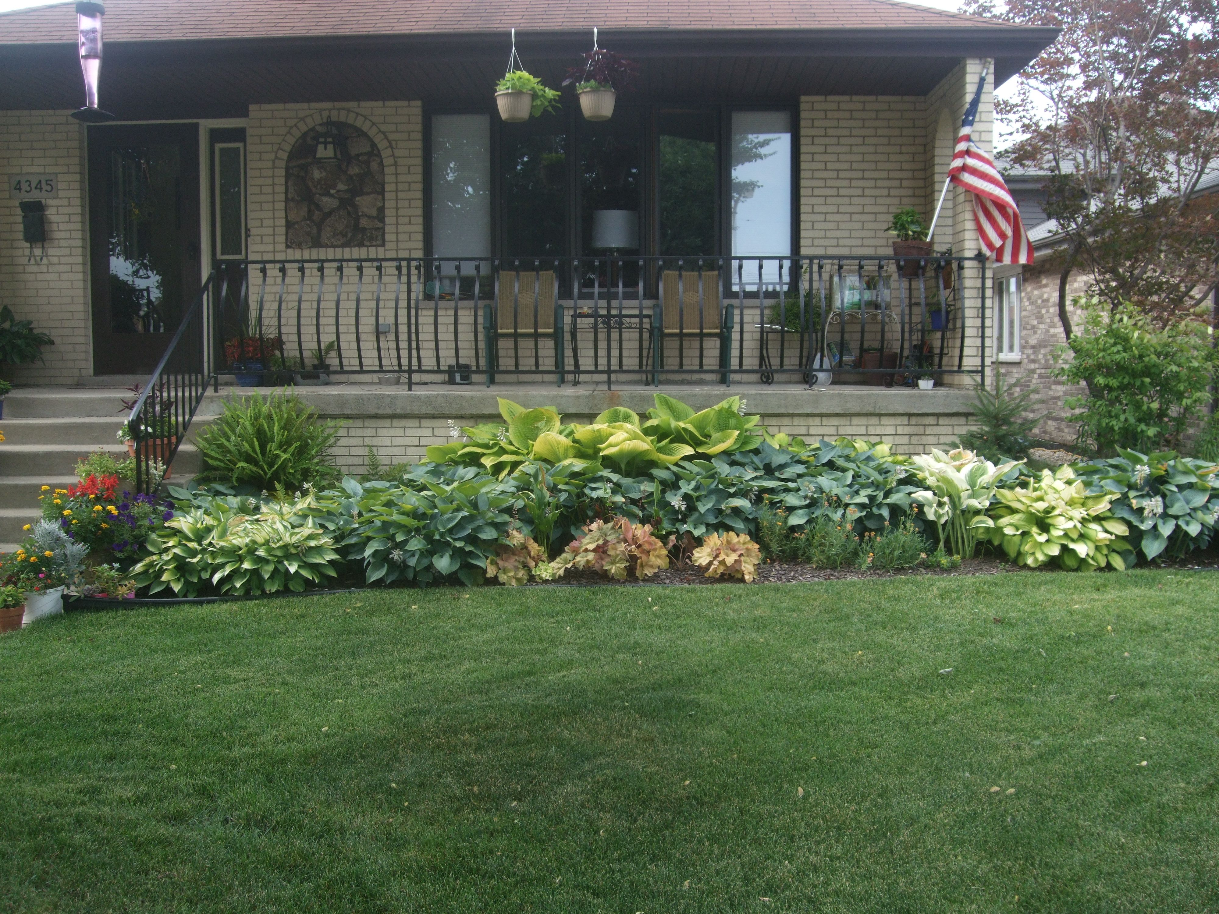 North-facing garden containing a variety of Hostas and ferns