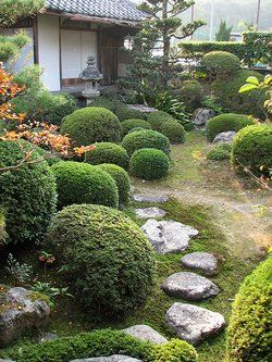 17 Best 1000 images about Garden Shrubs on Pinterest Gardens