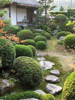 17 Best 1000 images about Garden Shrubs on Pinterest Gardens