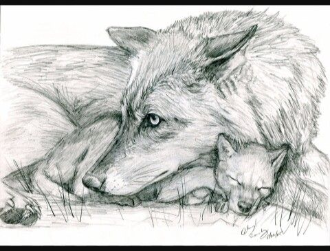Cute Drawing Of Mama Wolf And Pup With Images Wolf Drawing