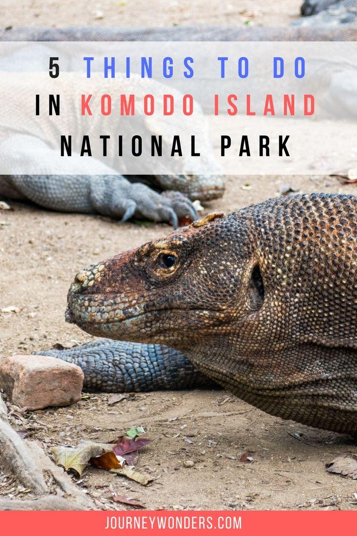 Komodo National Park, the last vestige of a Jurassic World ...