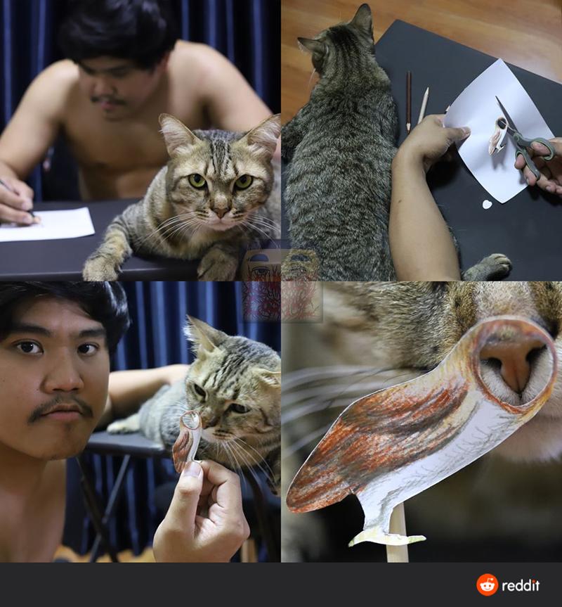 Cat Litter Full Of Caturday Memes
