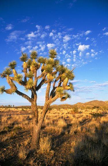 Hv066 Desert Air With Images Desert Photography Desert