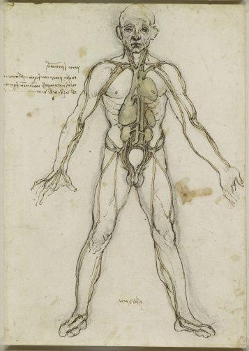Leonardo da Vinci (Vinci 1452-Amboise 1519) - The major organs and vessels