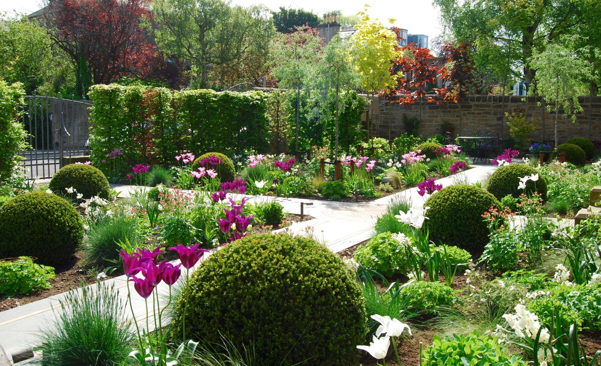 Front garden, clipped box balls, herbaceous planting ...
