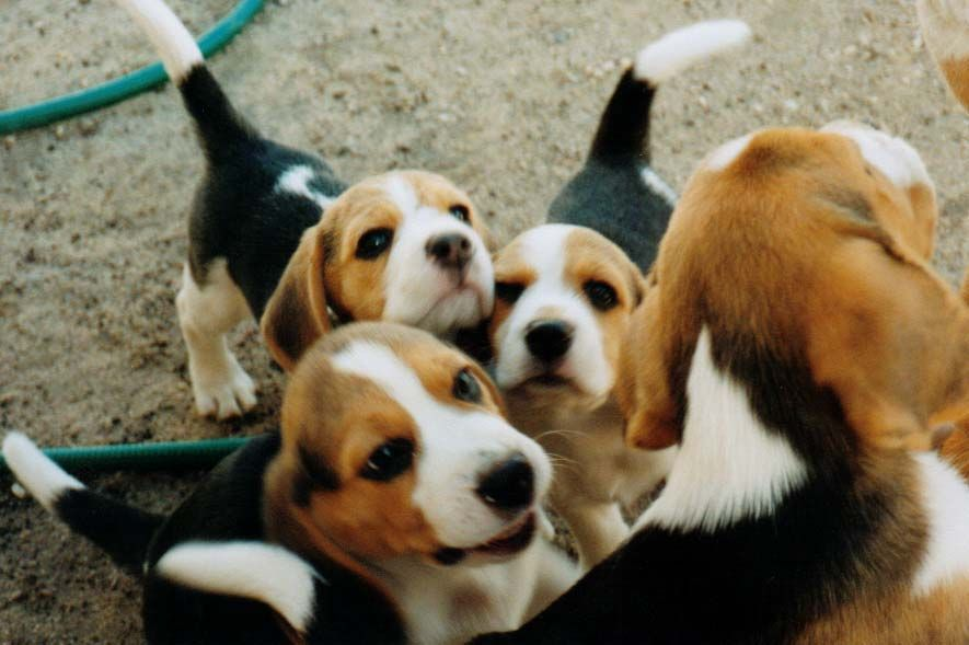 A Field Full Of Puppies Ok So Its Not Really A Field Of