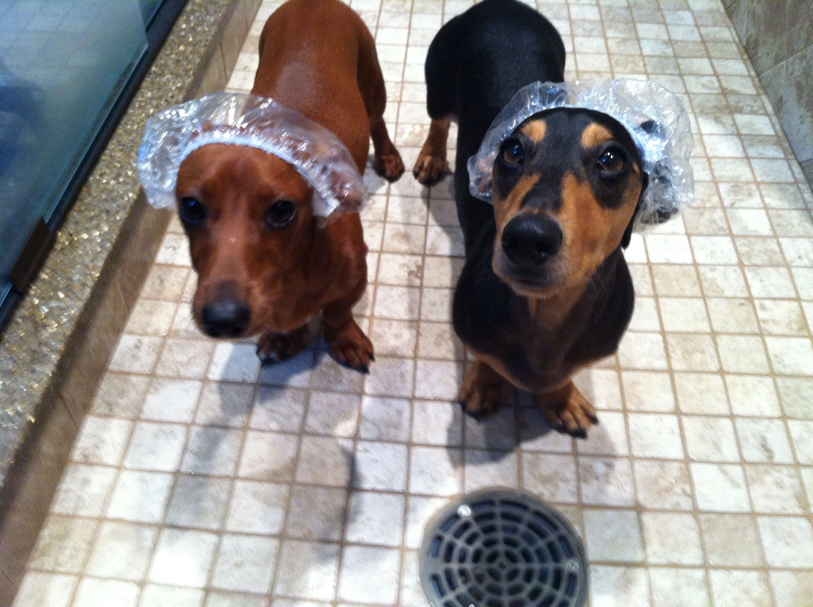 Spa Day For My Boys Dogs Animals Spa Day