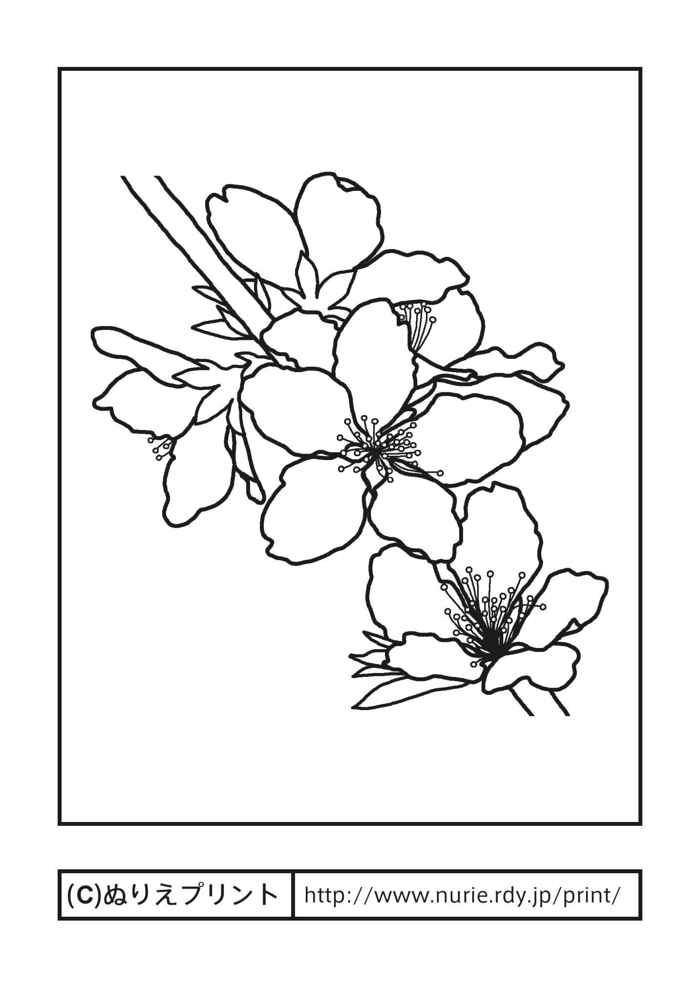 モモの花桃の花主線黒岡山県の花無料塗り絵都道府県ぬりえ