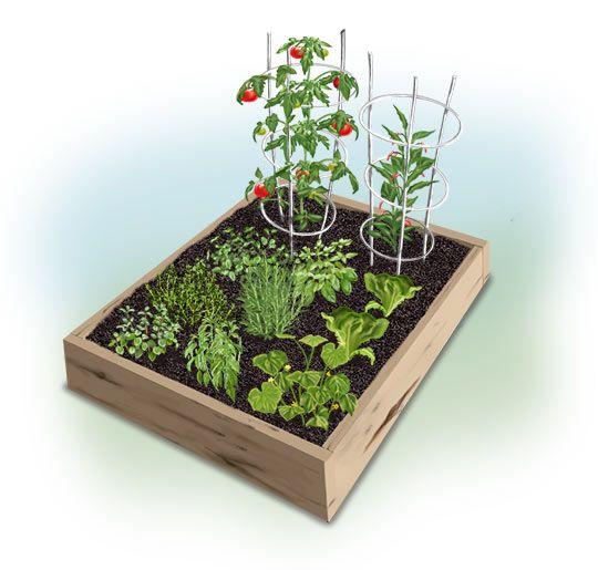 Easy 4 X 4 Summer Garden Vegetable Garden Planner Vegetable