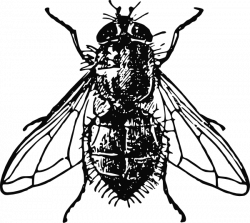 Peterm Housefly Clip Art At Clker Clipart Freeuse Flying Tattoo Insects Clip Art
