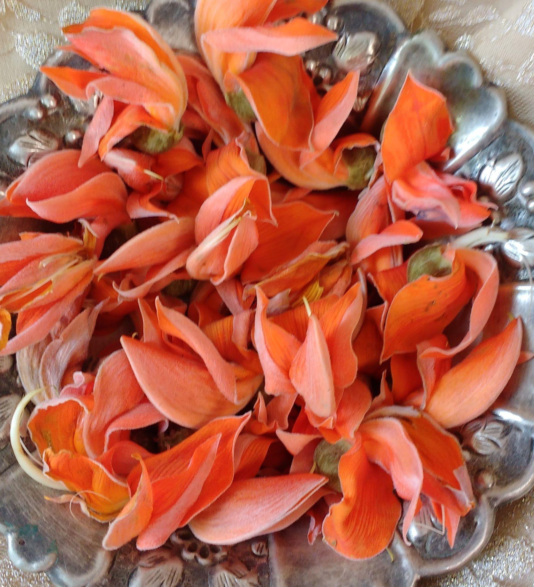 Flowers of Palash tree | virksha | Flowers, Beautiful ... Palash Flowers Images