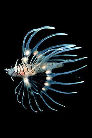 Very Nice Iphone Fish Wallpaper Lion Fish Ocean Animals Sea Fish