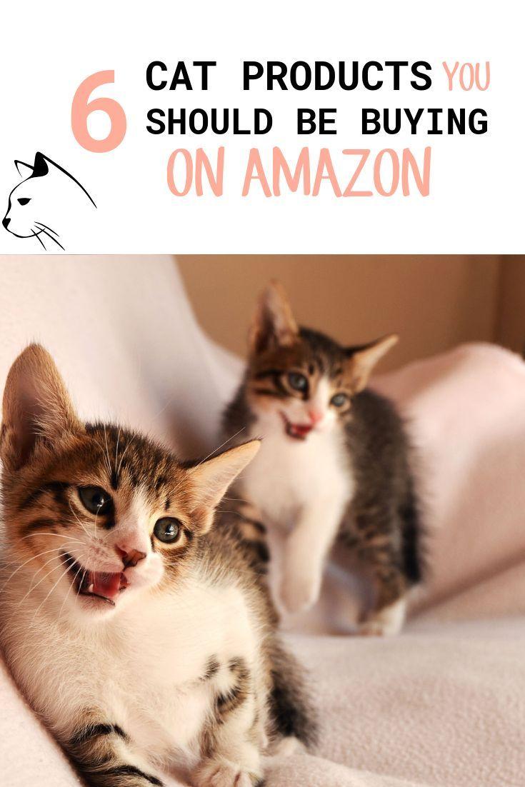 wellness kitten food amazon
