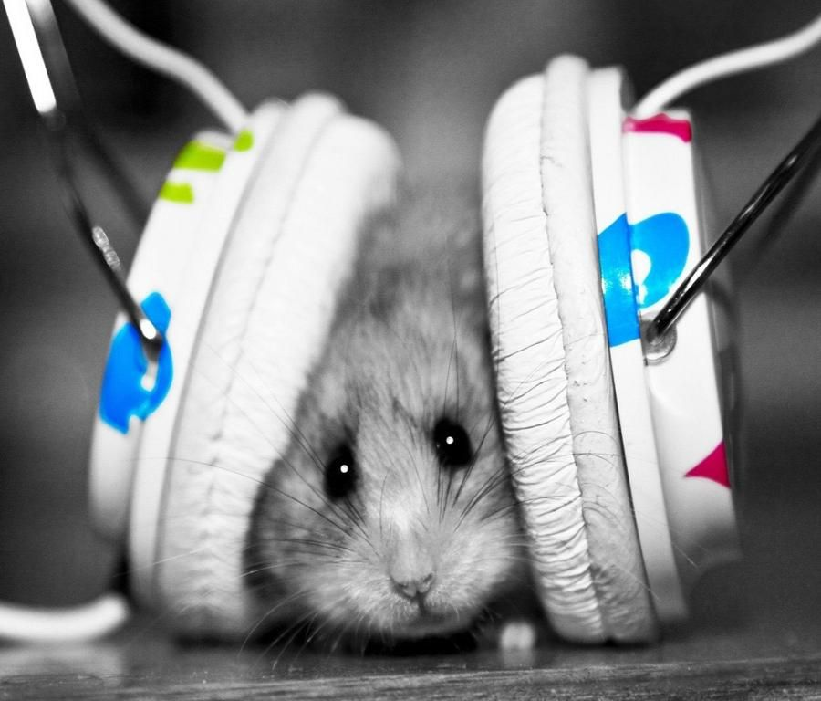 Dj Mouse Cute Hamsters Funny Animals Hamster